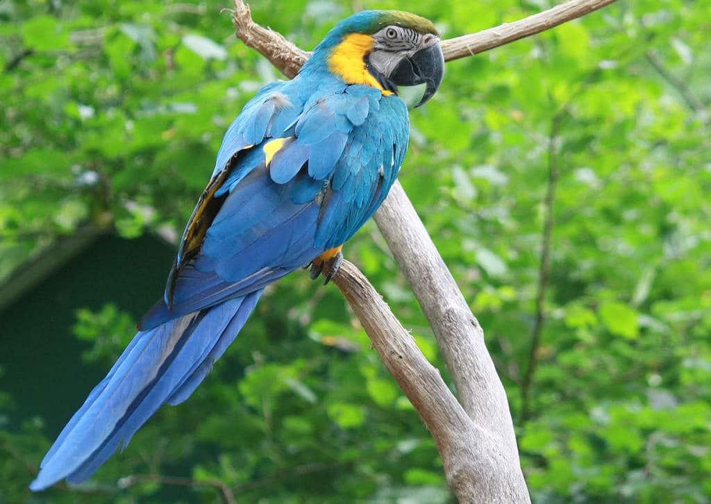 mysterieuse-jungle-modèle-perroquet-gribouilleuse