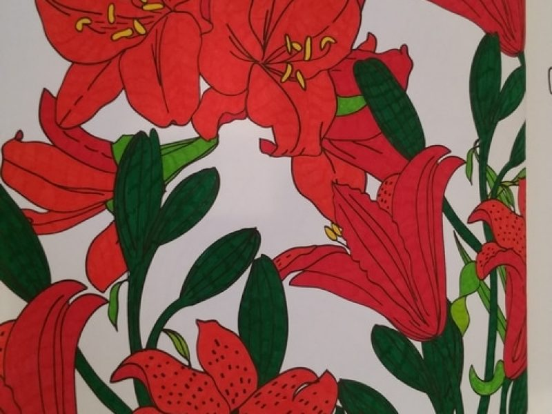 Quelques fleurs rouges