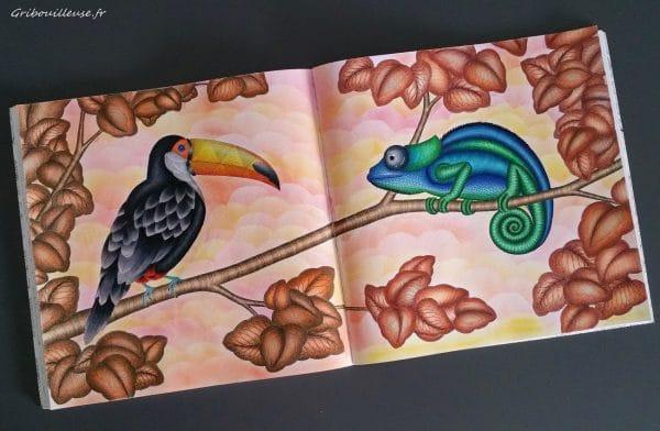Animaux Fantastiques de Millie Marotta - Coloriage n°6 et 7
