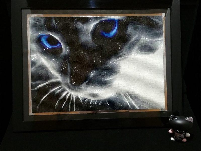 Diamond Painting 6 : Le chat aux yeux bleus